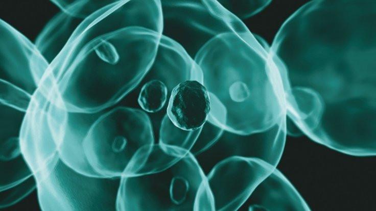 Antioksidanlar kanserin yayılmasına neden oluyor