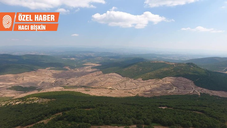 195 bin ağaç kesildi: Büyük bir katliam!