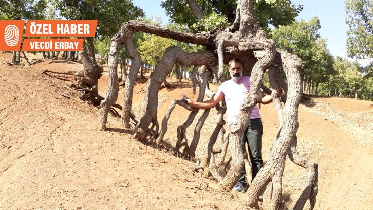Ergani'de 'yürüyen ağaçlar'
