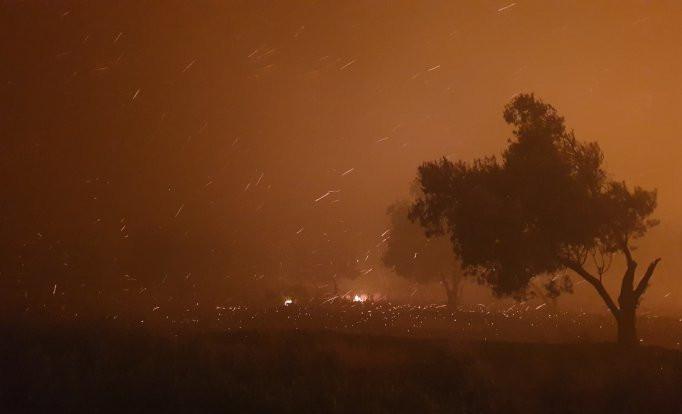 Çanakkale yangını: İnsanlar iyi, 'canlar' gitti - Sayfa 4