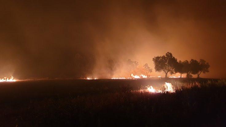 Çanakkale yangını: İnsanlar iyi, 'canlar' gitti - Sayfa 2