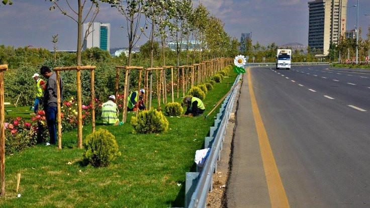 Ankara'da ithal ağaç dönemi sona eriyor