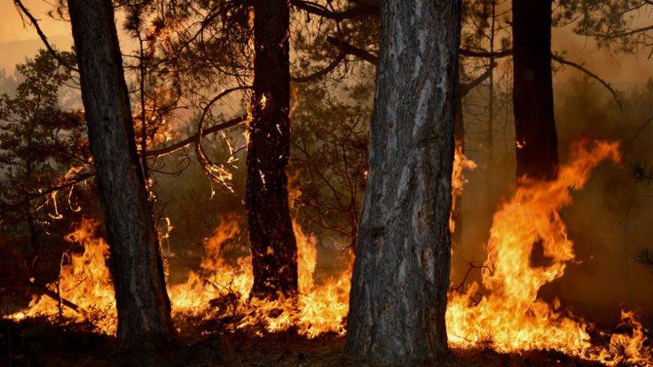 Eskişehir'de çıkan orman yangını kontrol altına alındı