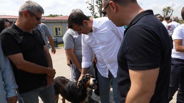İmamoğlu: Sokak hayvanları için manifesto lazım