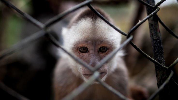 Kaçakçılıktan kurtarılan hayvanlar