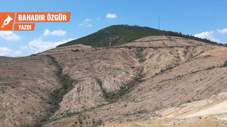 Kaz Dağları'nın ardındaki hırsızlık ittifakı