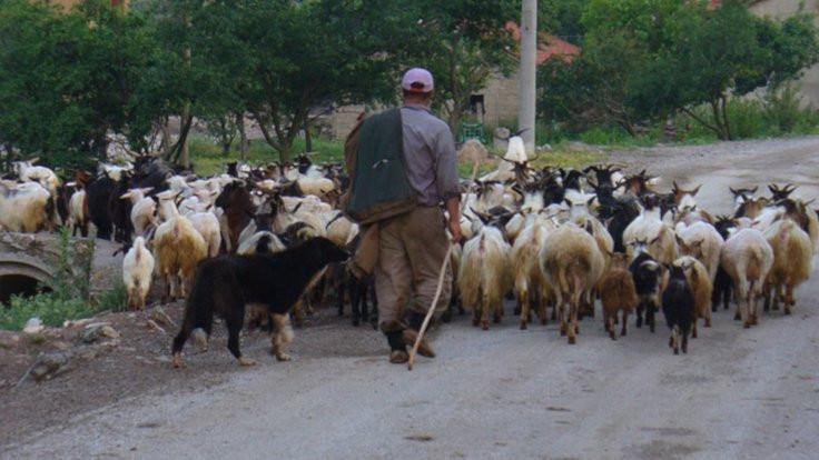 Bakanlığın hayvanları öldü, mahalle karantinada
