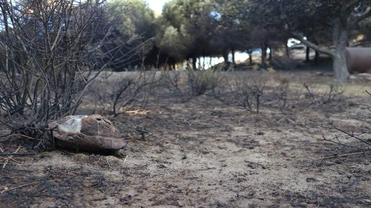 Marmara Adası'ndaki yangının bilançosu açıklandı: 80 hektar kül oldu!