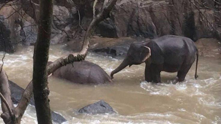Altı fil, birbirlerini kurtarmaya çalışırken öldü