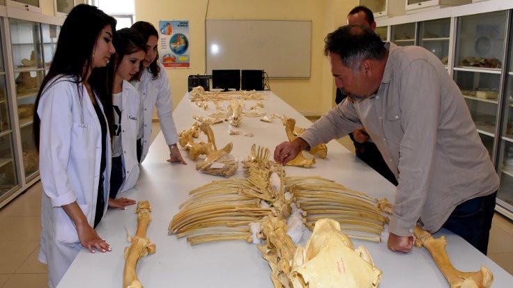 7 milyon yıllık Anadolu tarihi 'ayaklanıyor'