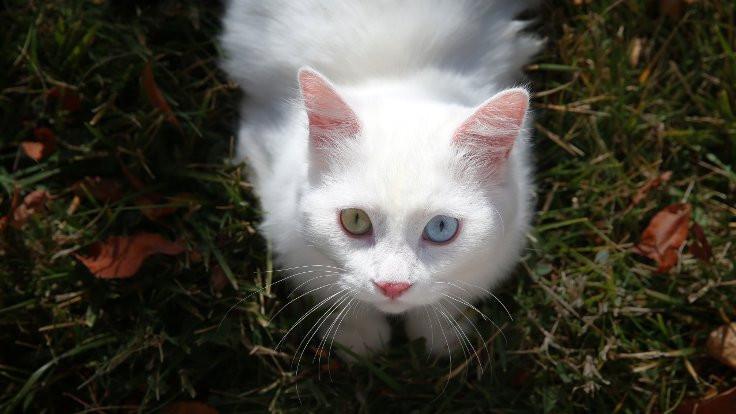 Yarışma sonucu: En güzel kedi 'Su'