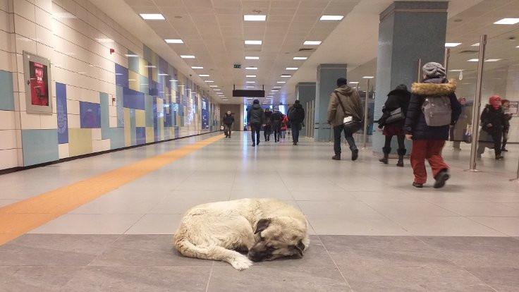 Sokak hayvanları metroya sığındı