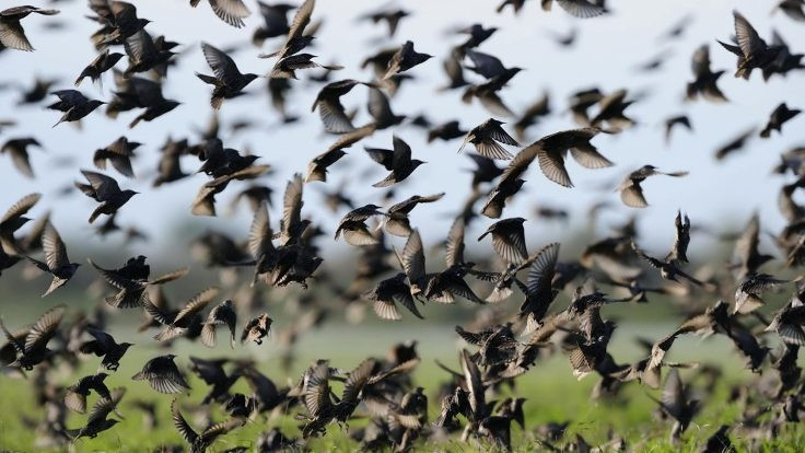 İstanbul'a uyarı: Ölü kuşlara dokunmayın
