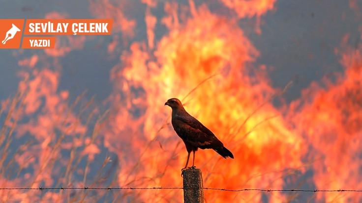 Kundakçı kuşlarının azmettiricileri