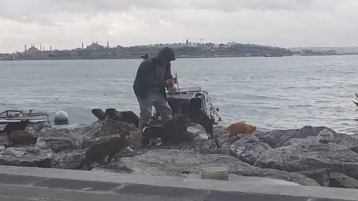 Balıkçının yolunu gözleyen kediler
