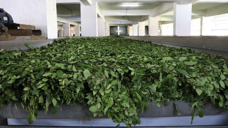 Çay işçileri için önlem alınsın çağrısı