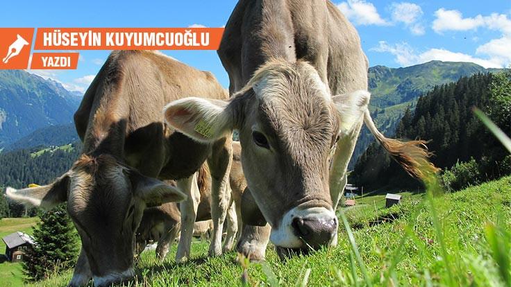 Covid-19, sığır otlatma kuralları ve etik