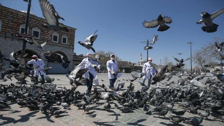 İstanbul'da özel izinle güvercin beslediler