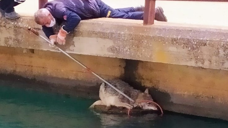 Nusaybin'de kanala düşen kurt kurtarıldı