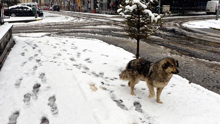 Ardahan'a mayısta kar yağdı