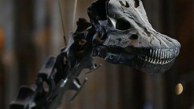 10 metrelik dinozor fosili bulundu