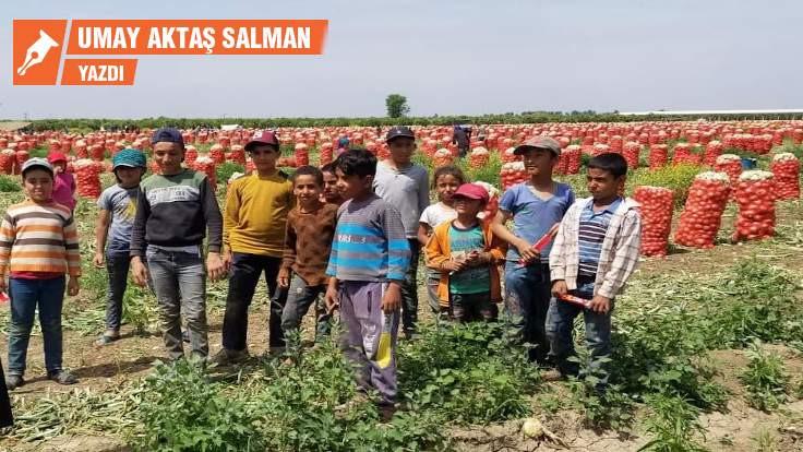 Tarım işçileri: Uzaktan eğitime de çok uzaklar