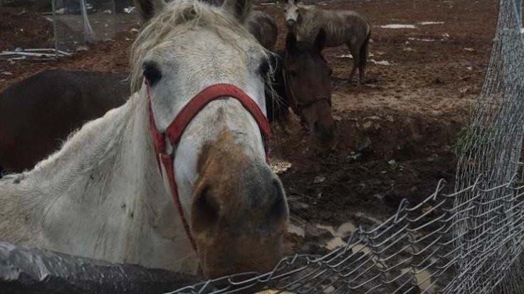 Adalar'daki atların ilk sahibi İÜ oldu