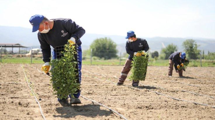 Aydın Belediyesi'nden sağlıklı sebze ve meyve için yeni adım