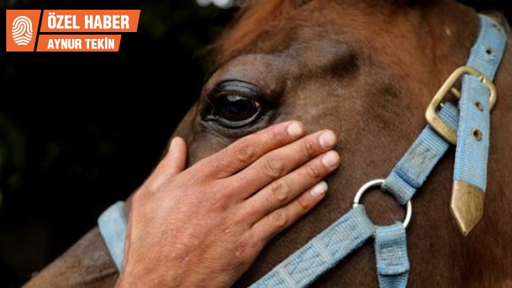 Adalar'da at beslemek de mi yasaklandı?