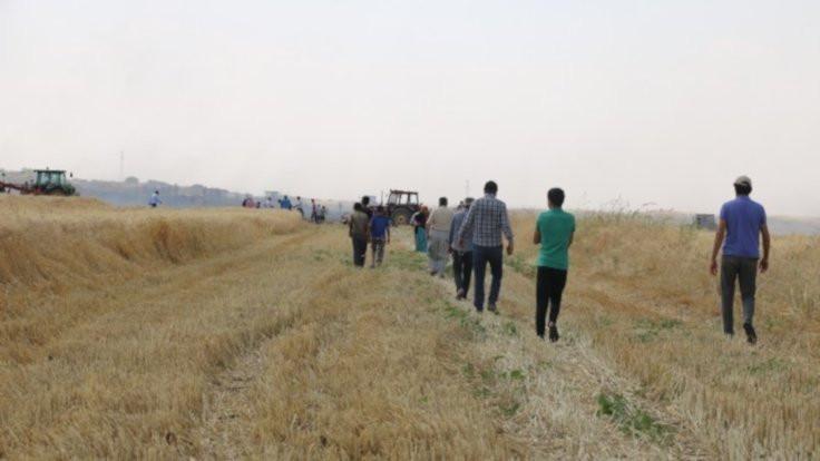 Derik'te buğday tarlası yandı