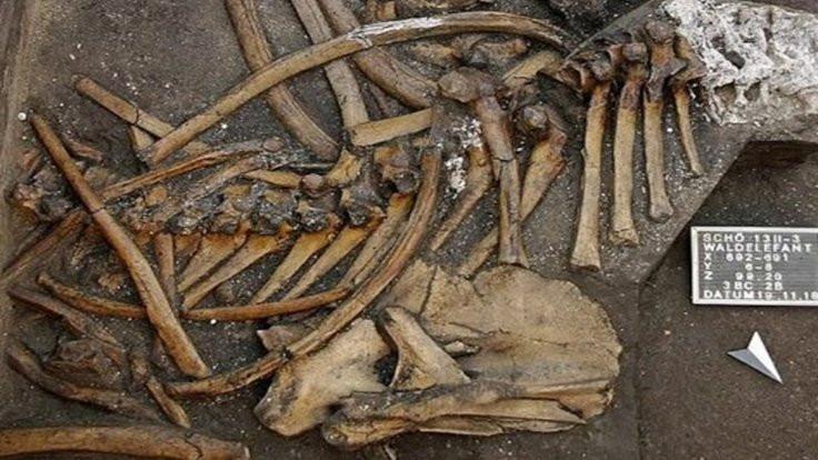 300 bin yıllık iskelet bulundu