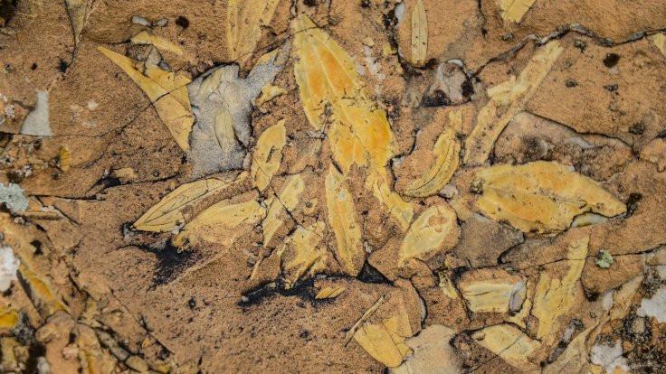 Iğdır'da palmiye fosili: Denize kıyısı varmış