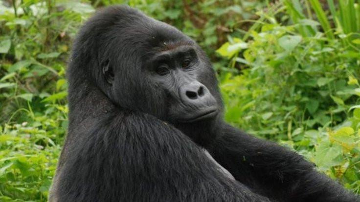 Goril Rafiki'nin katiline 11 yıl hapis cezası