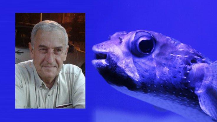 Balon balığı yedi öldü: 'Sürekli yiyorum' demiş