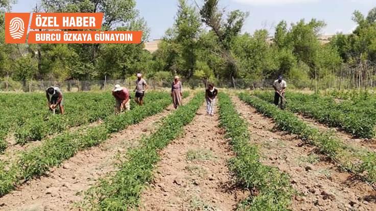 Şehirden köye organik tarım için göç ettiler