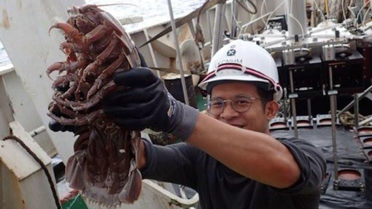 Endonezya'da okyanusun dibinde 'dev hamam böceği' bulundu