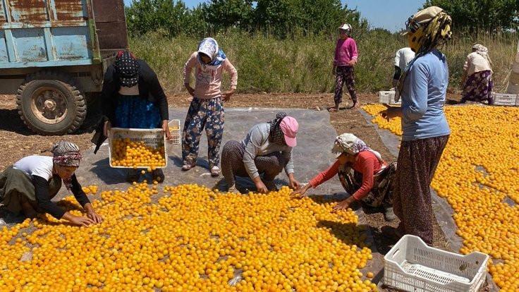 Mevsimlik işçiler: Hepsi Kürt hepsi yoksul... - Sayfa 1