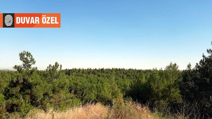 Üniversitede ormanlık alana yapılaşma izni