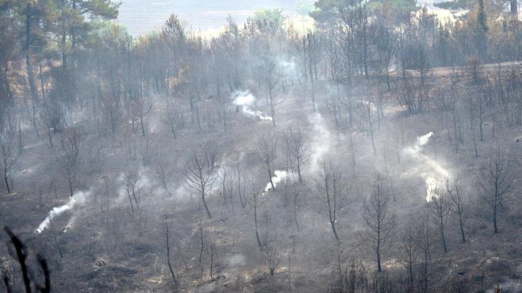 Gelibolu'da 450 hektar orman yandı