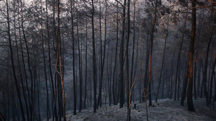 Adana'daki yangın 2 gündür söndürülemedi