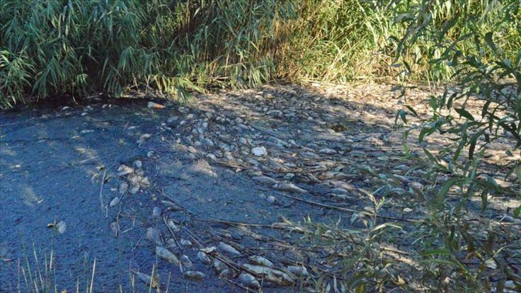 Adıyaman'daki toplu balık ölümleri incelenecek