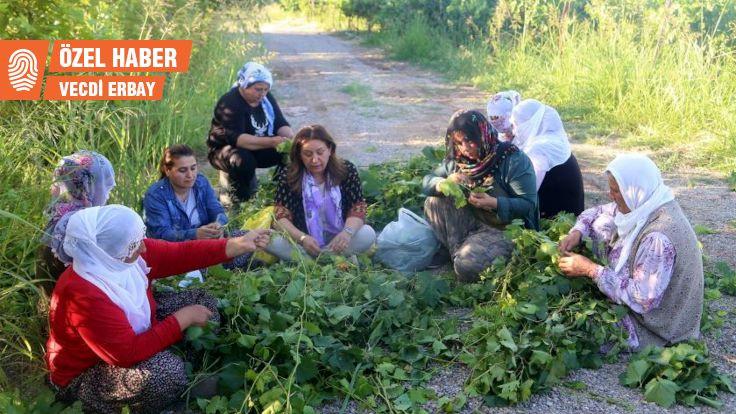 Bismil'de kayyımların kuruttuğu bahçe