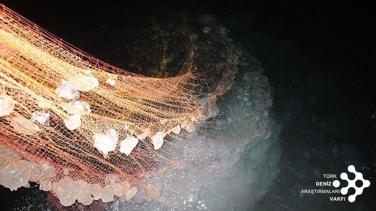 Türkiye'de denizanası yaralanmaları arttı: Balık dolu denizlerden denizanası dolu denizlere - Sayfa 3