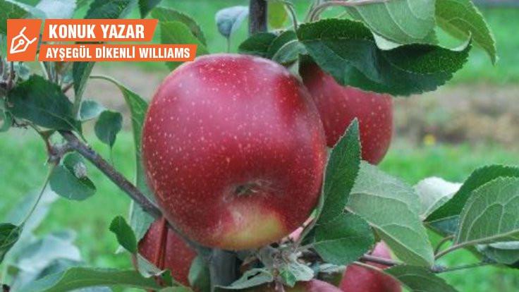 İklim krizine dayanıklı elma: HOT84A1