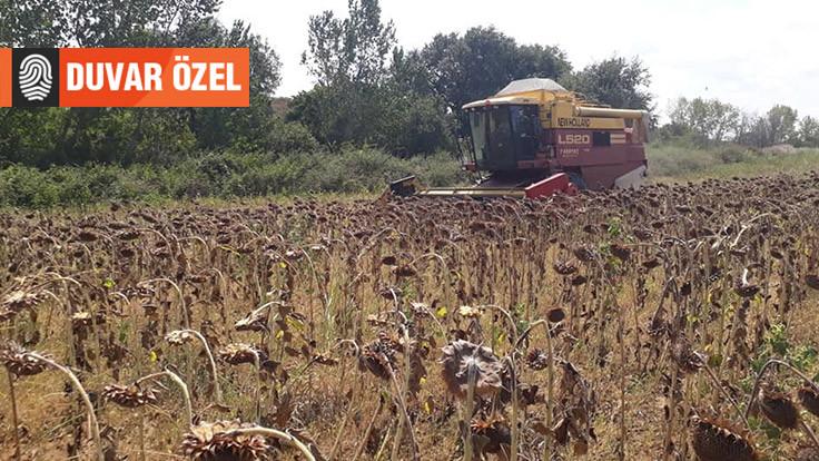 Çiftçi-Sen: Ayçiçeği fiyatı 4 bin TL olmalı