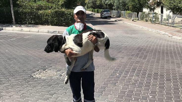 Üç bacaklı köpekle temizlik işçisinin dostluğu
