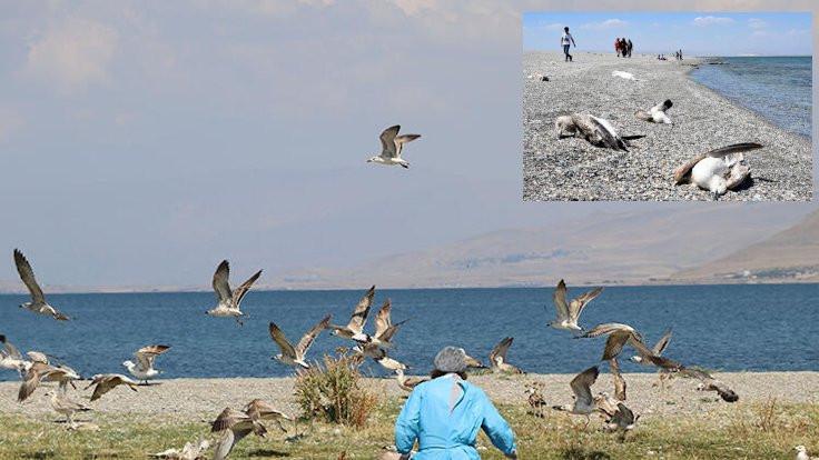 Van Gölü'nde martı ölümleri paniği