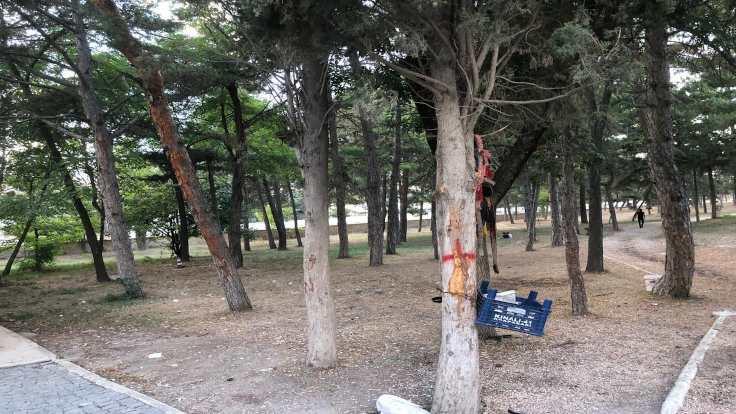 Ertuğrul Gazi'de ağaçlar için direniş