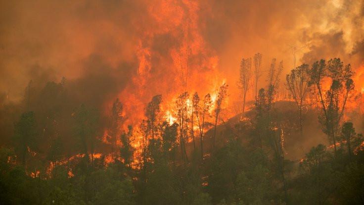 ABD'de orman yangınlarında 15 kişi öldü