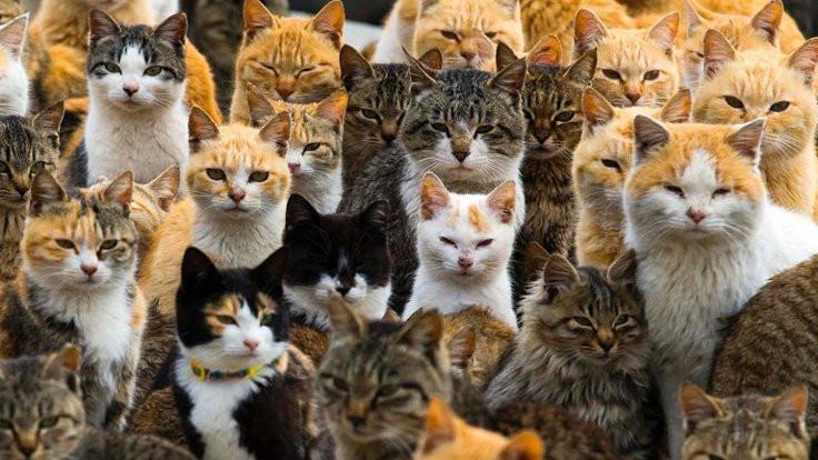 İspanya'da bir evde 120 kedi bulundu